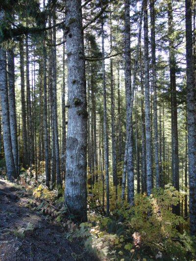 OregonWoodland